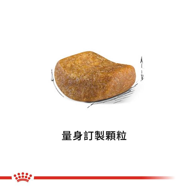 3182550756440皇家(貓)BS34短毛貓4KG