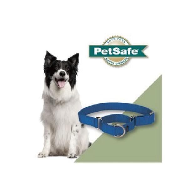 759023001623(C)專業犬頸圈L(藍)