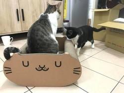 45cm大「貓窩貓抓板」7折特價699 「貓米糰」躺著、站著都好玩!
